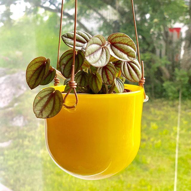 Ampel potte til små blomster/urter. @engelskmannsbrygga #kunsthåndverk #handmade #glass @norgesglass #norskinteriør #norskdesign #norwegiancrafts #design