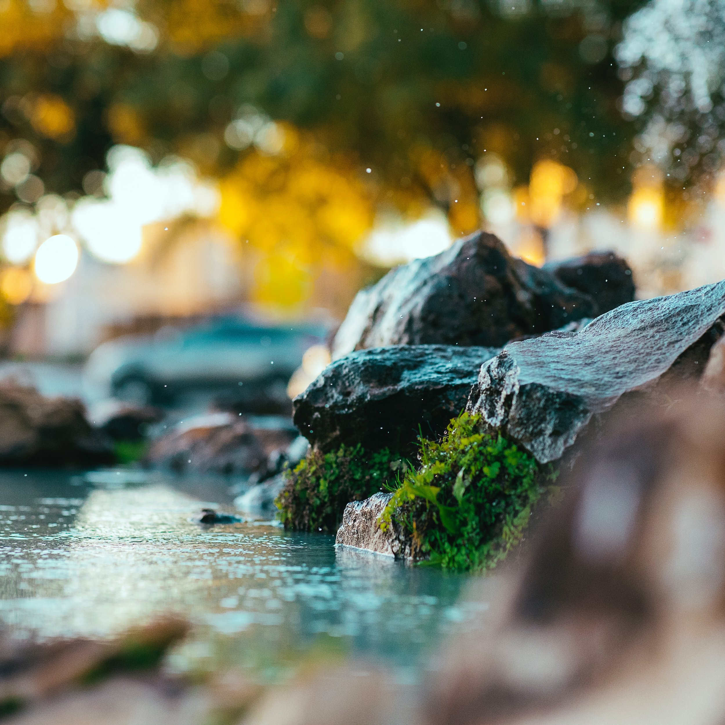 blur-bokeh-color-2233391.jpg