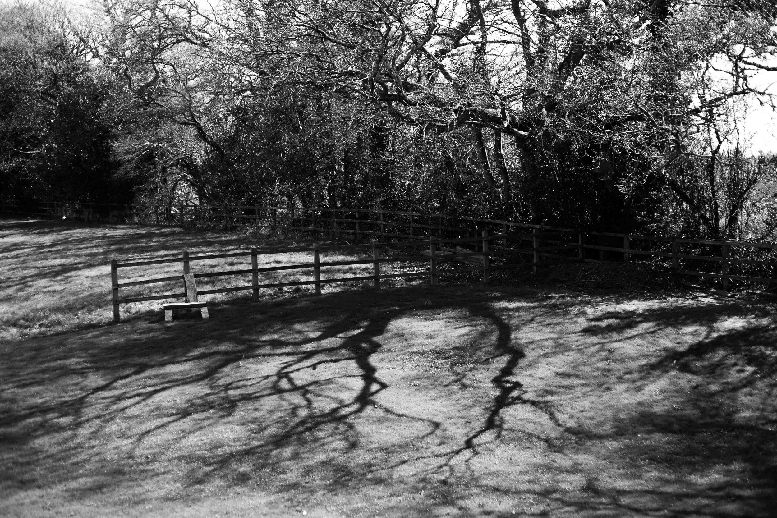 Reflections on those warm reaching shadows