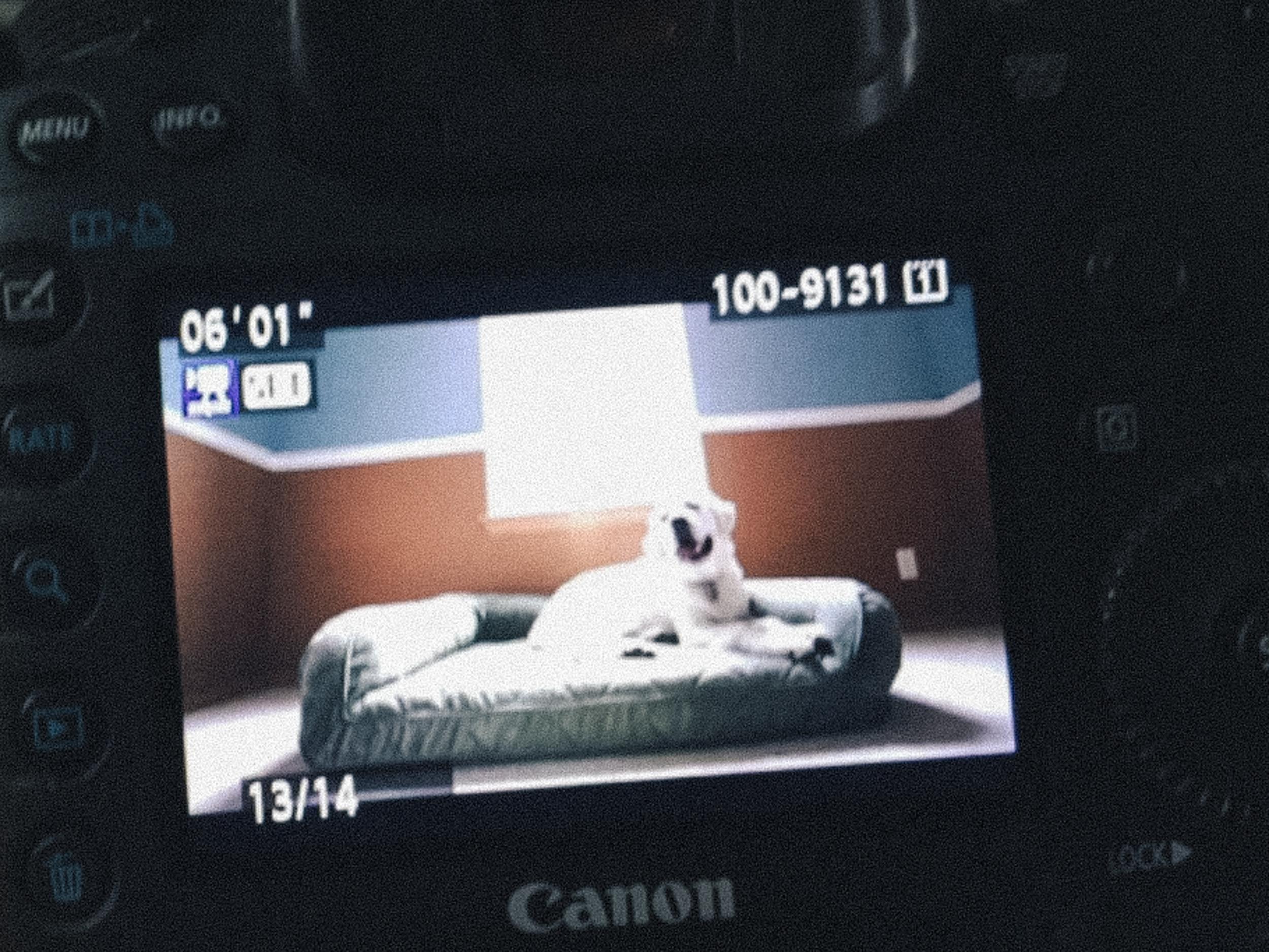 tempur-pedic dog bed