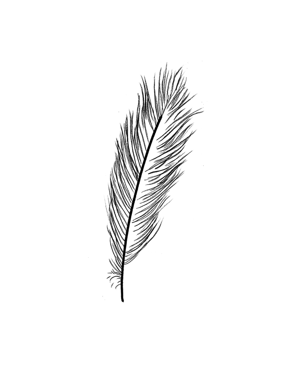 Feather-1B.jpg