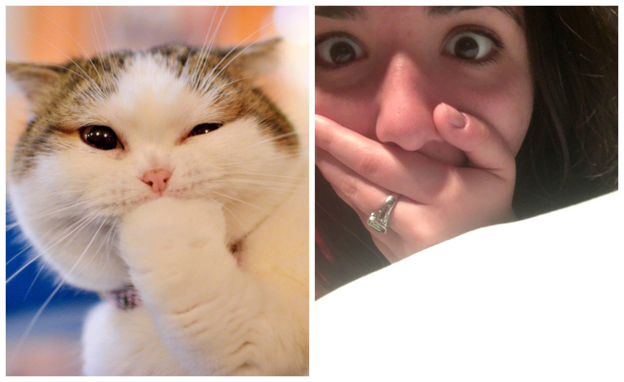 Olivia - Cat