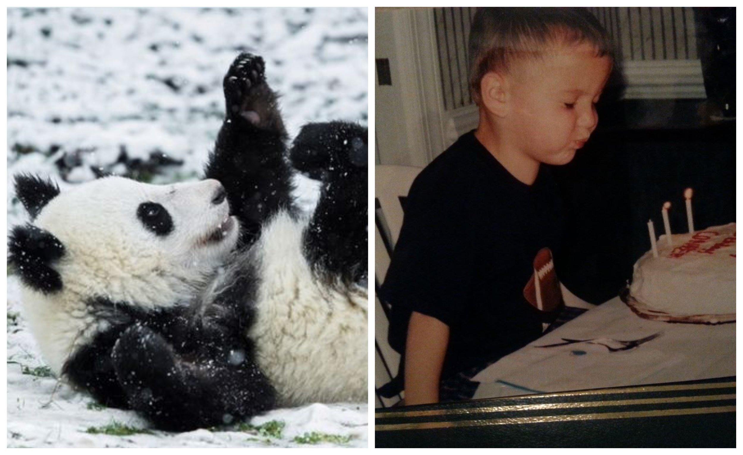 Conner - Panda