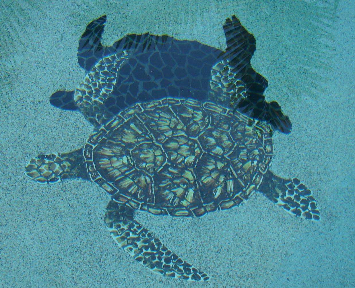 Closeup Turtle