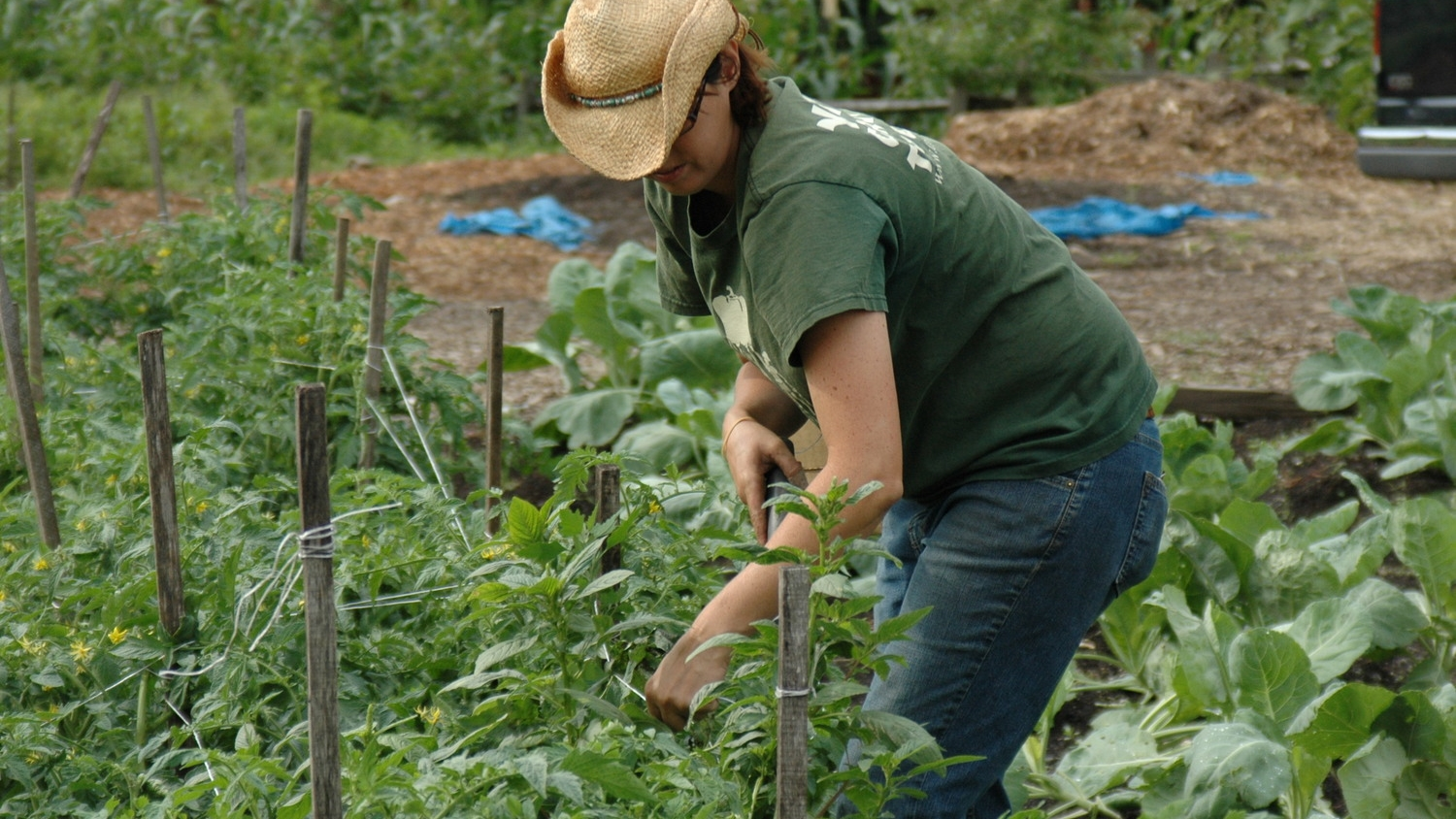 Farm Shares    Eat healthy local food!    Join a CSA today