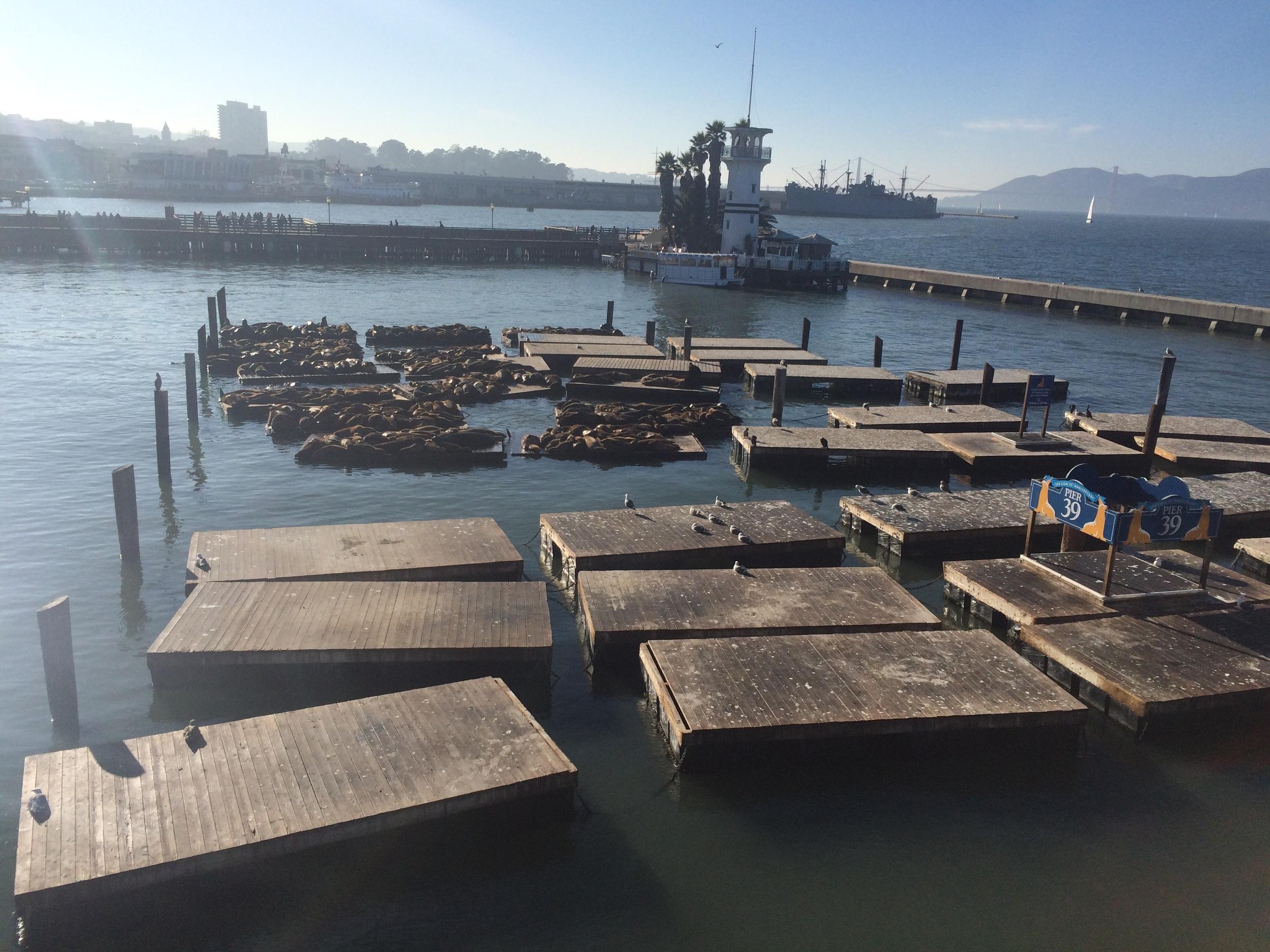 Pier 39 // San Francisco, California