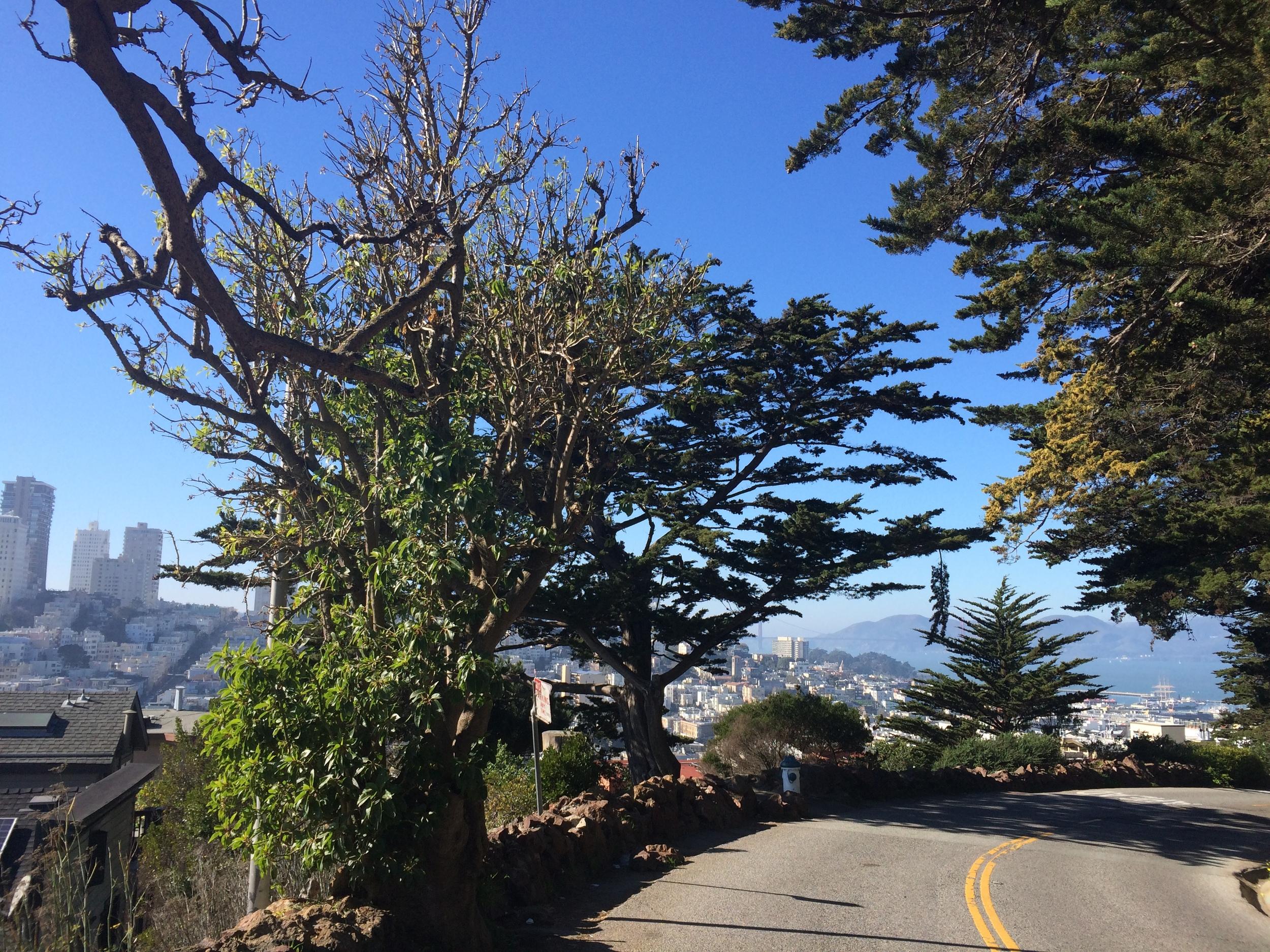 Coit Tower // San Francisco, California