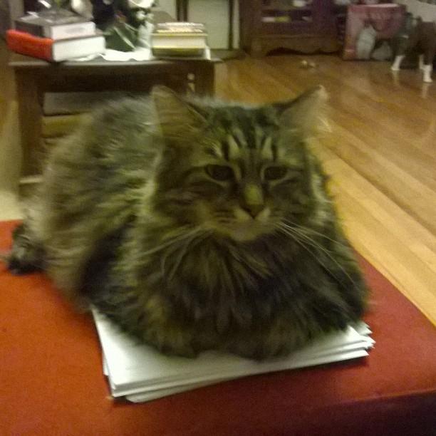 judgmental cat is editing.