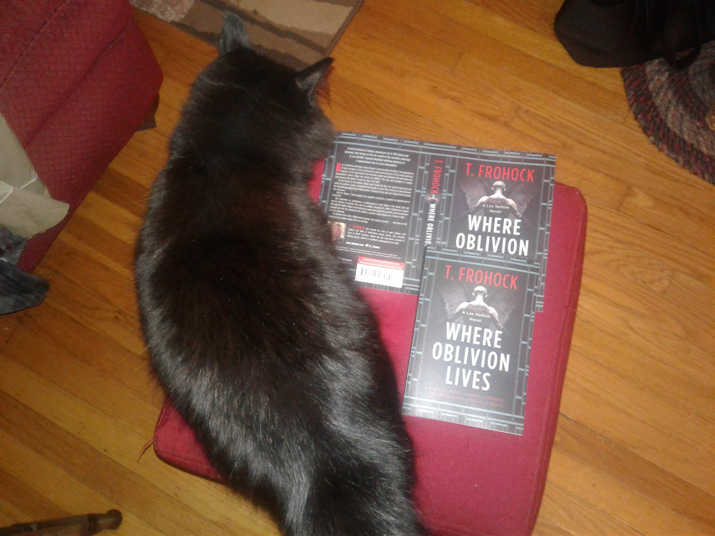 Emerson inspecting early copies of where oblivion lives and she gives them black cat approval.