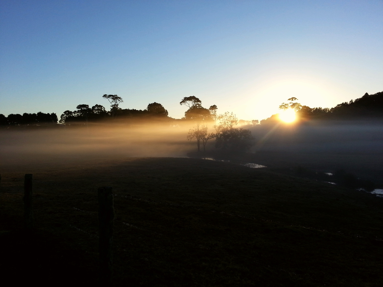 dispersing in the morning mist