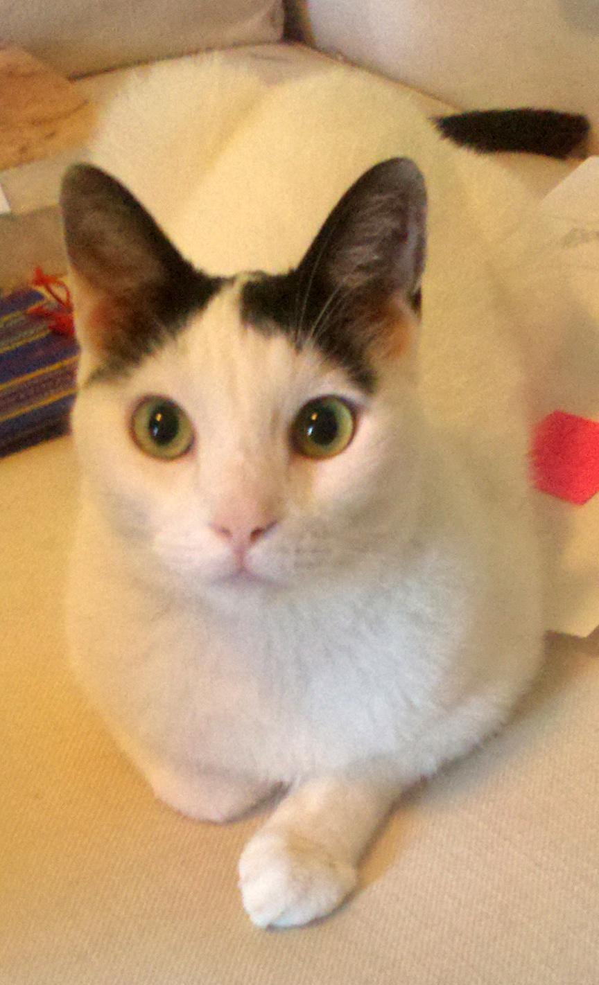 homefront veterinary cat