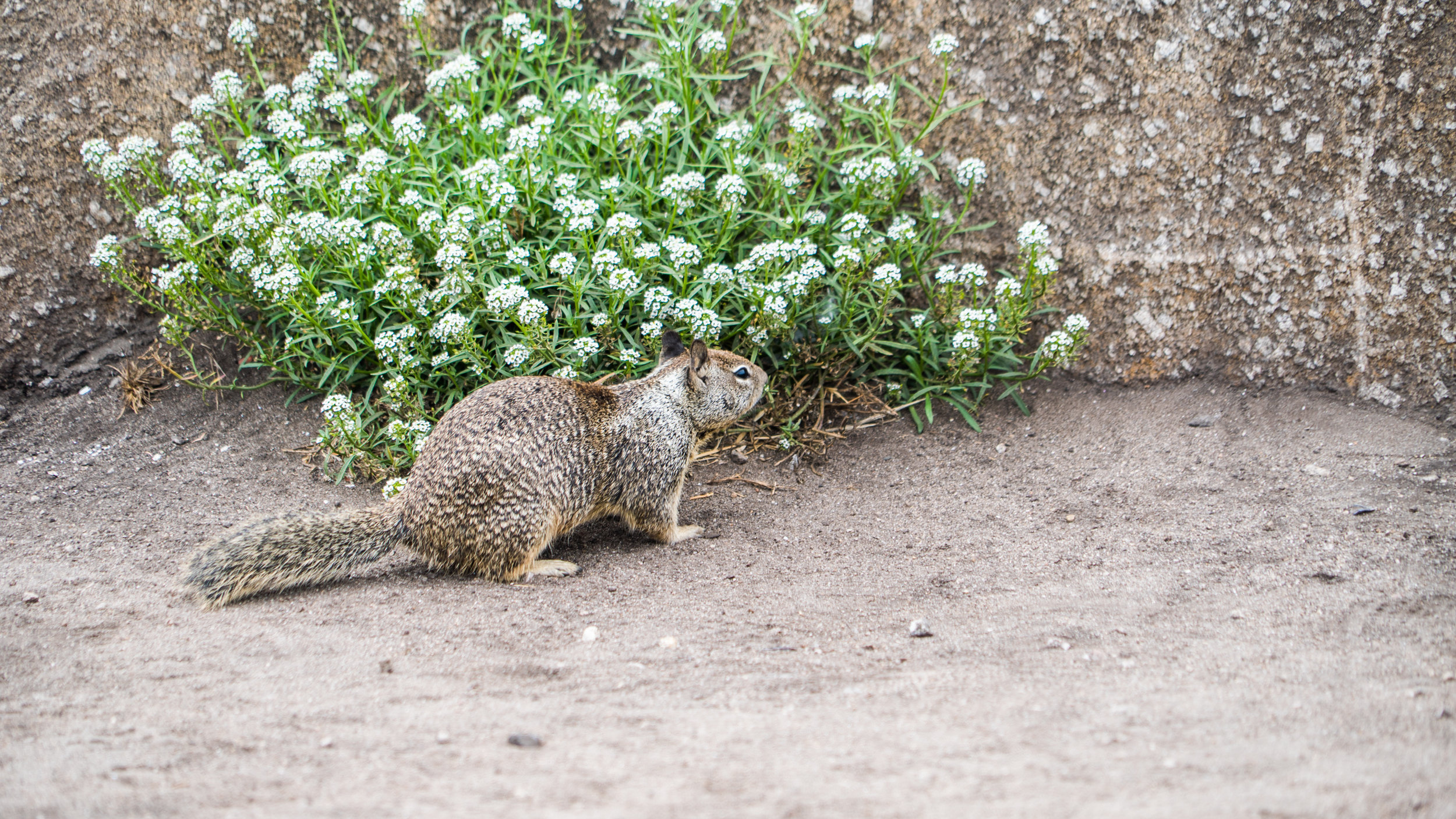 2017-09-09_IGSM_Monterey_Trip_DSC06959.jpg