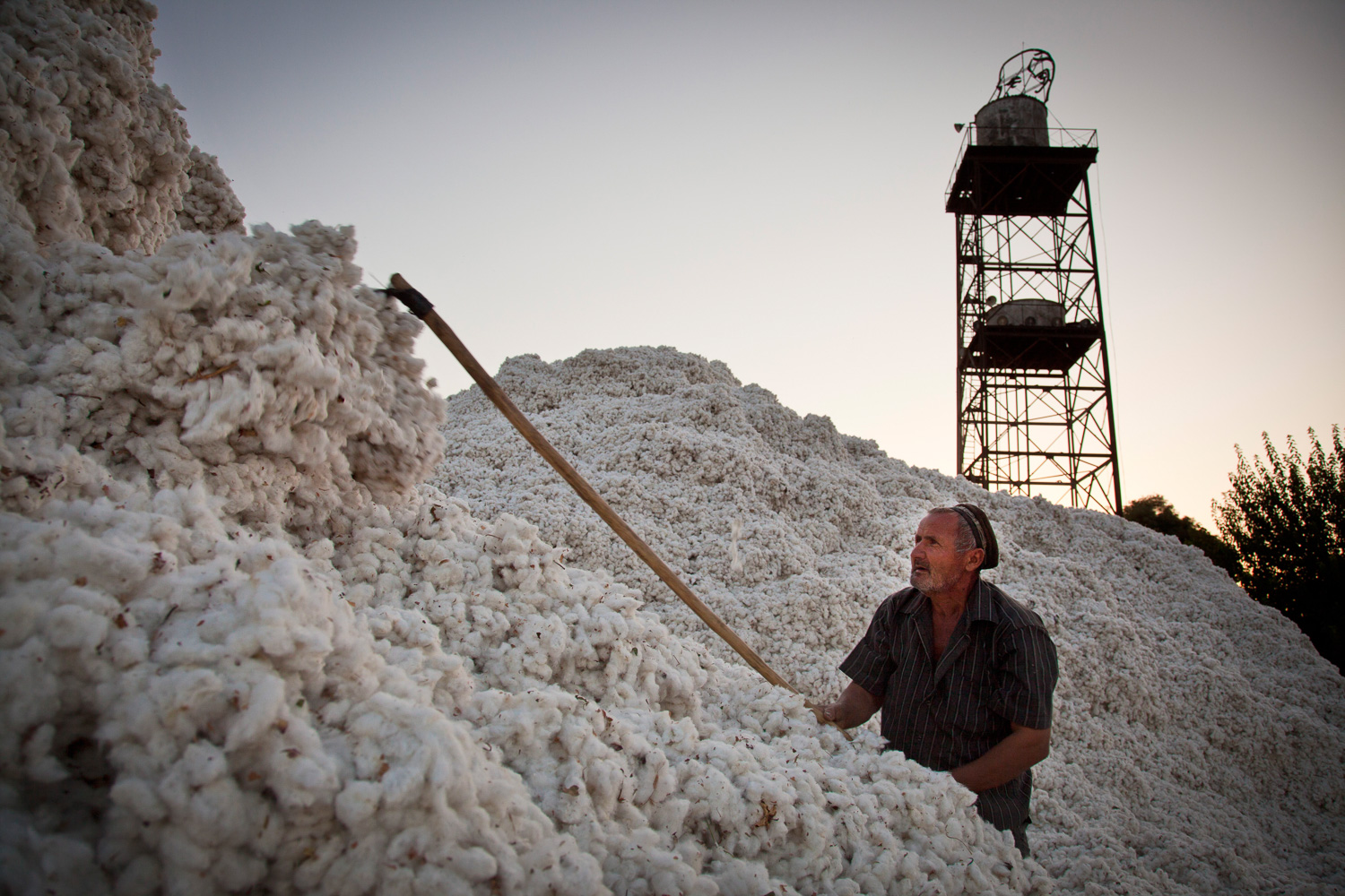 Cotton harvest near Tursunzoda, Tajikistan