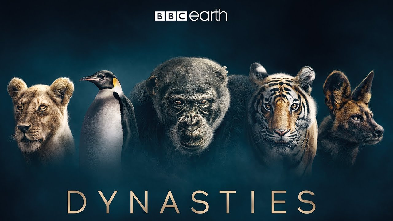 Dynasties (BBC)  composer: Benji Merrison, Will Slater Orchestration