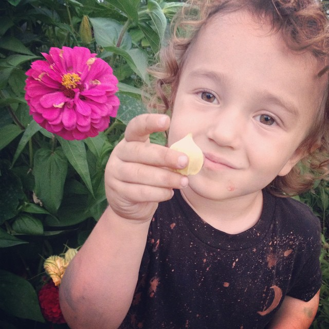 Owen loves ground cherries. We have three bushes they look like miniatures worlds when you lift up their woven branches to find the fallen ones.