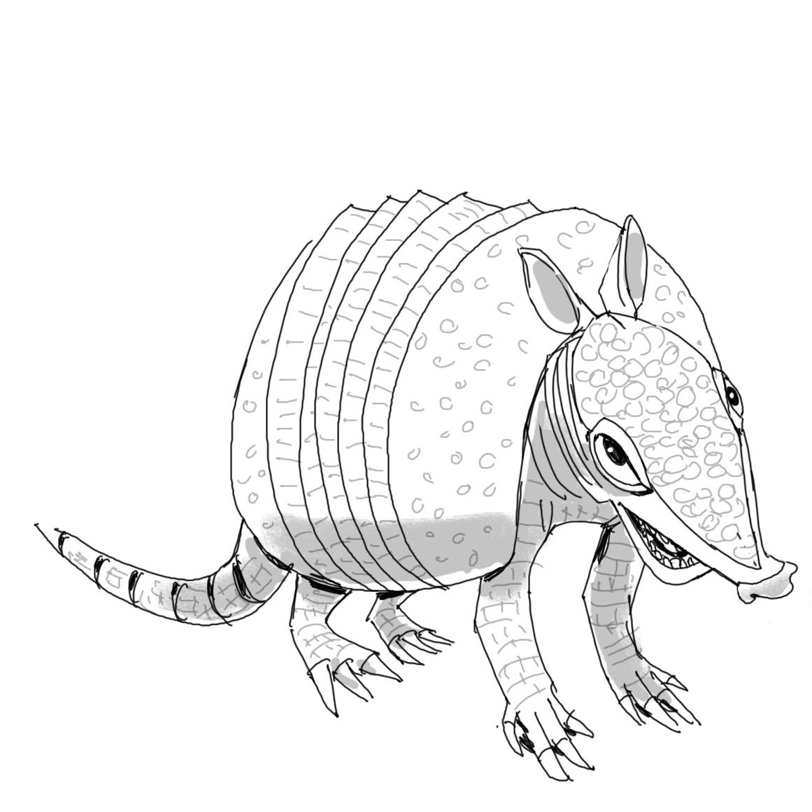 armadillo_housespecial_sketches3.jpg