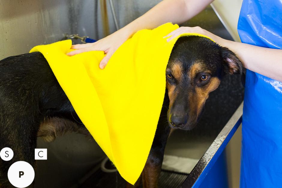 Dog Grooming Newnan, GA
