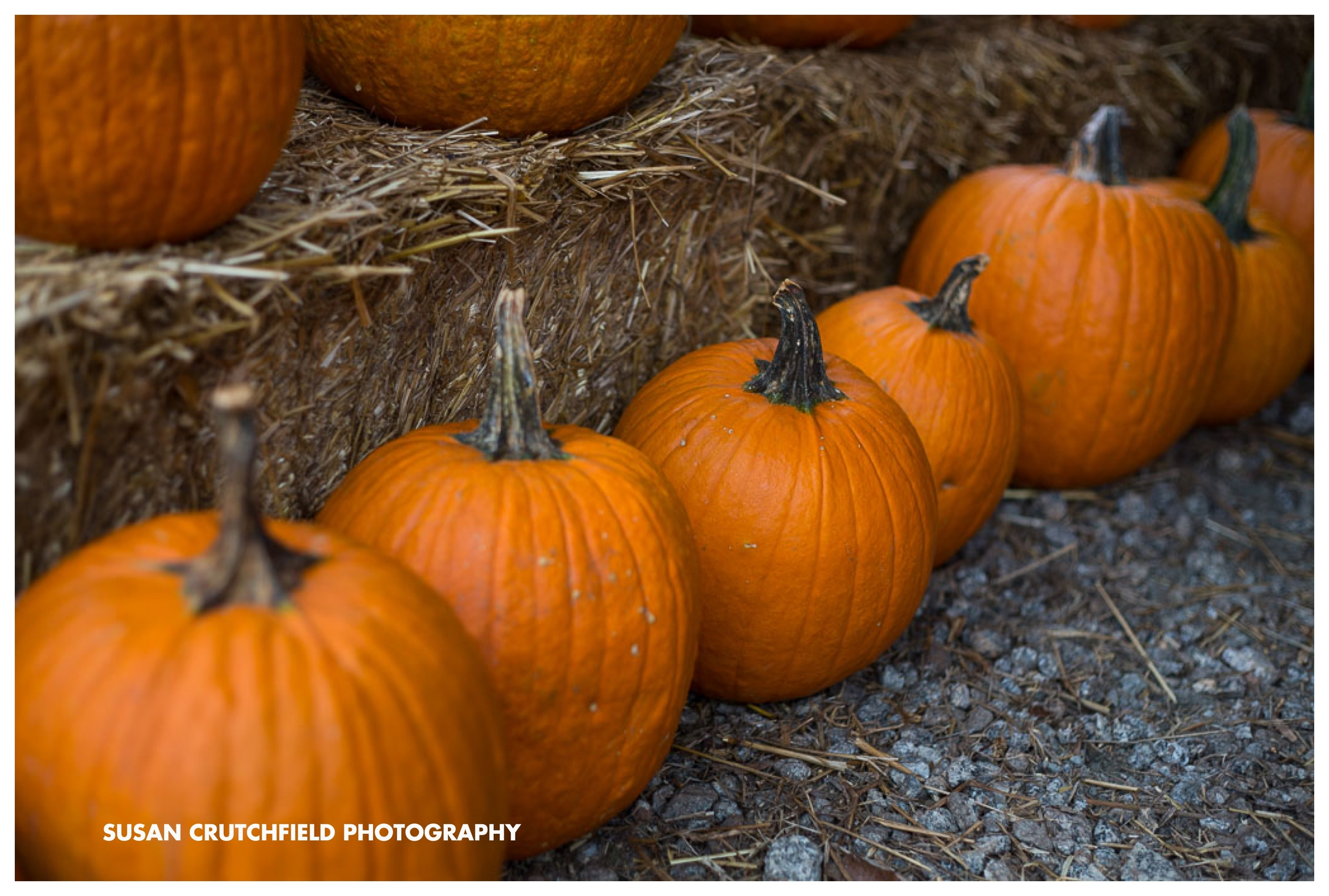 Wargo's Pumpkin Patch Luthersville, GA © Susan Crutchfield Photography