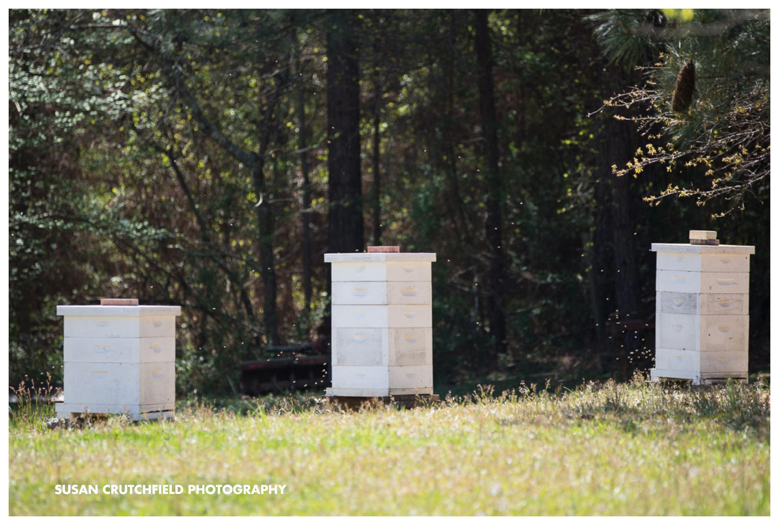Georgia Beekeeper