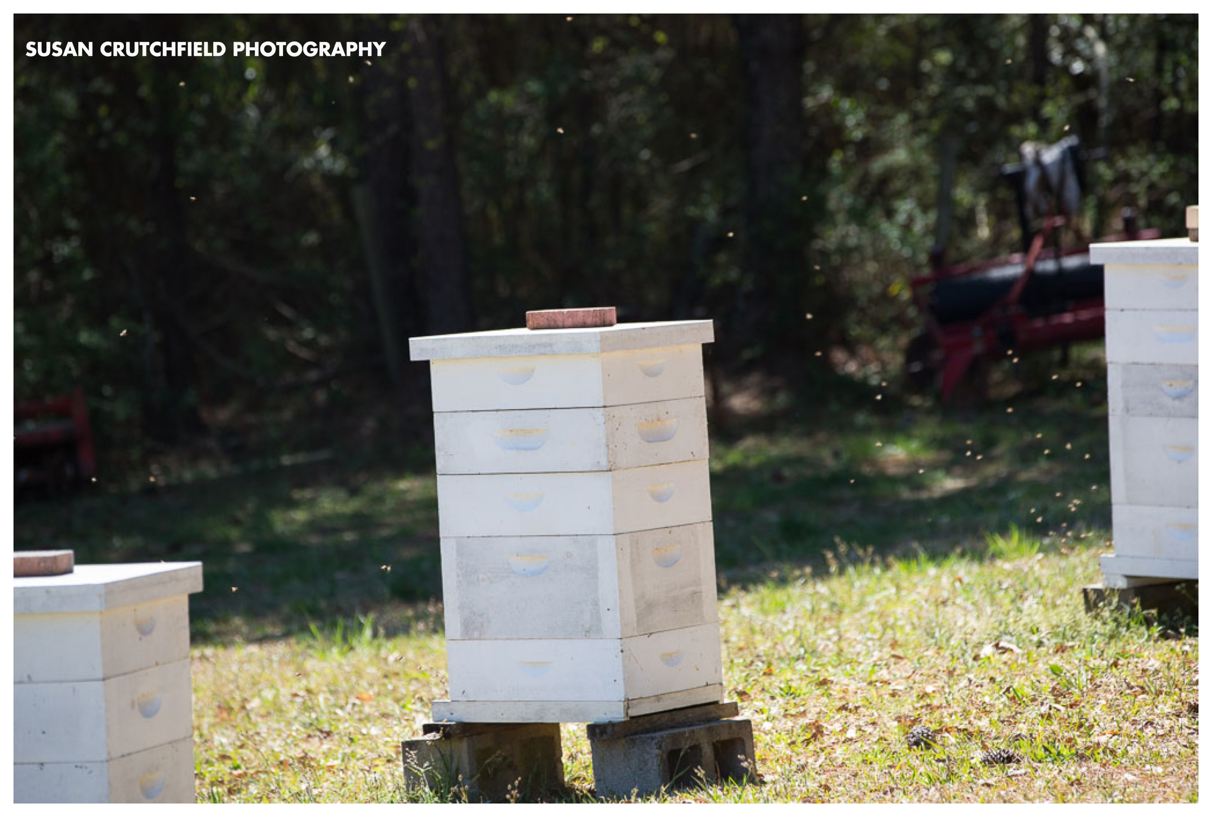 Local Honey Newnan, GA