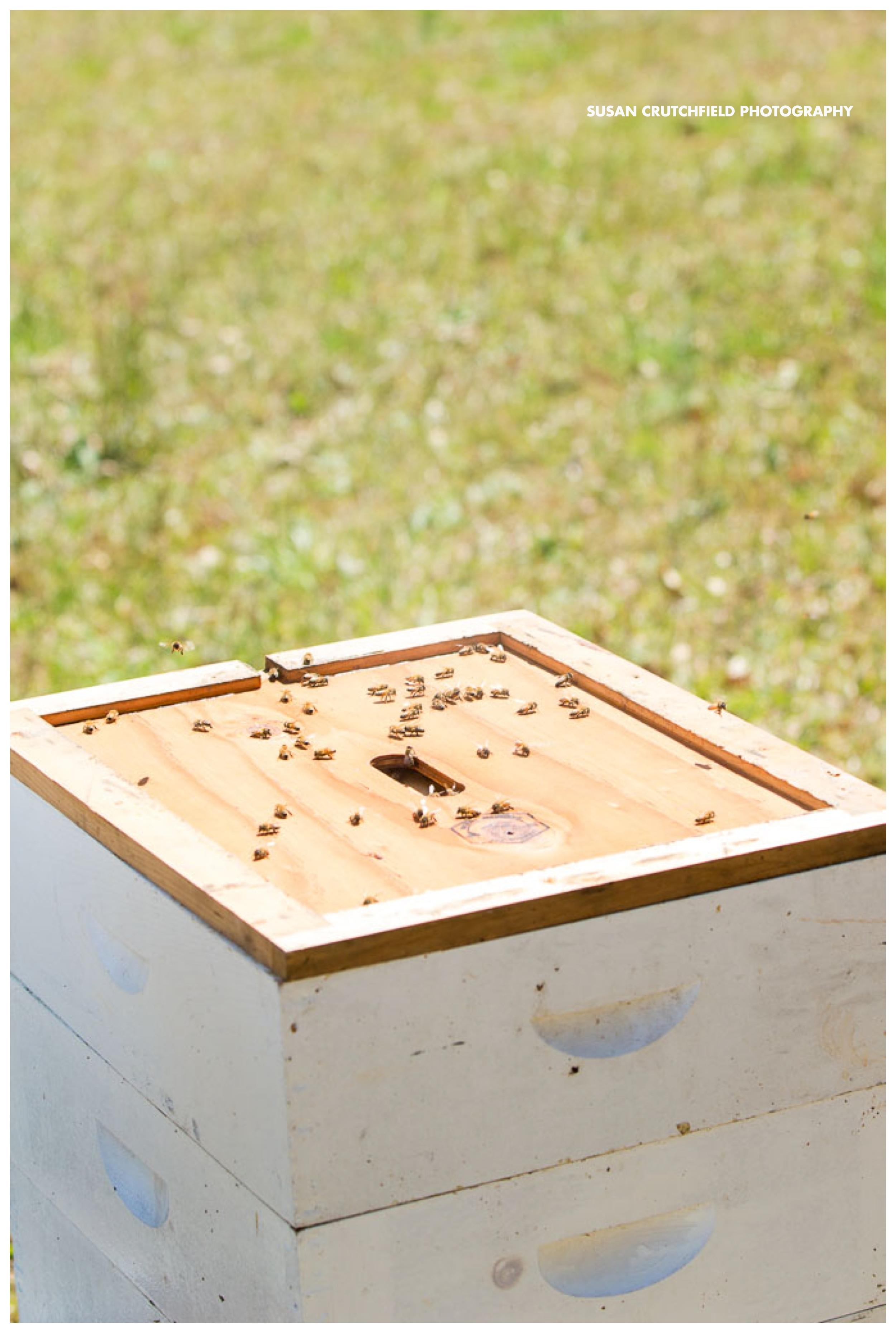 Beekeepers Newnan, GA
