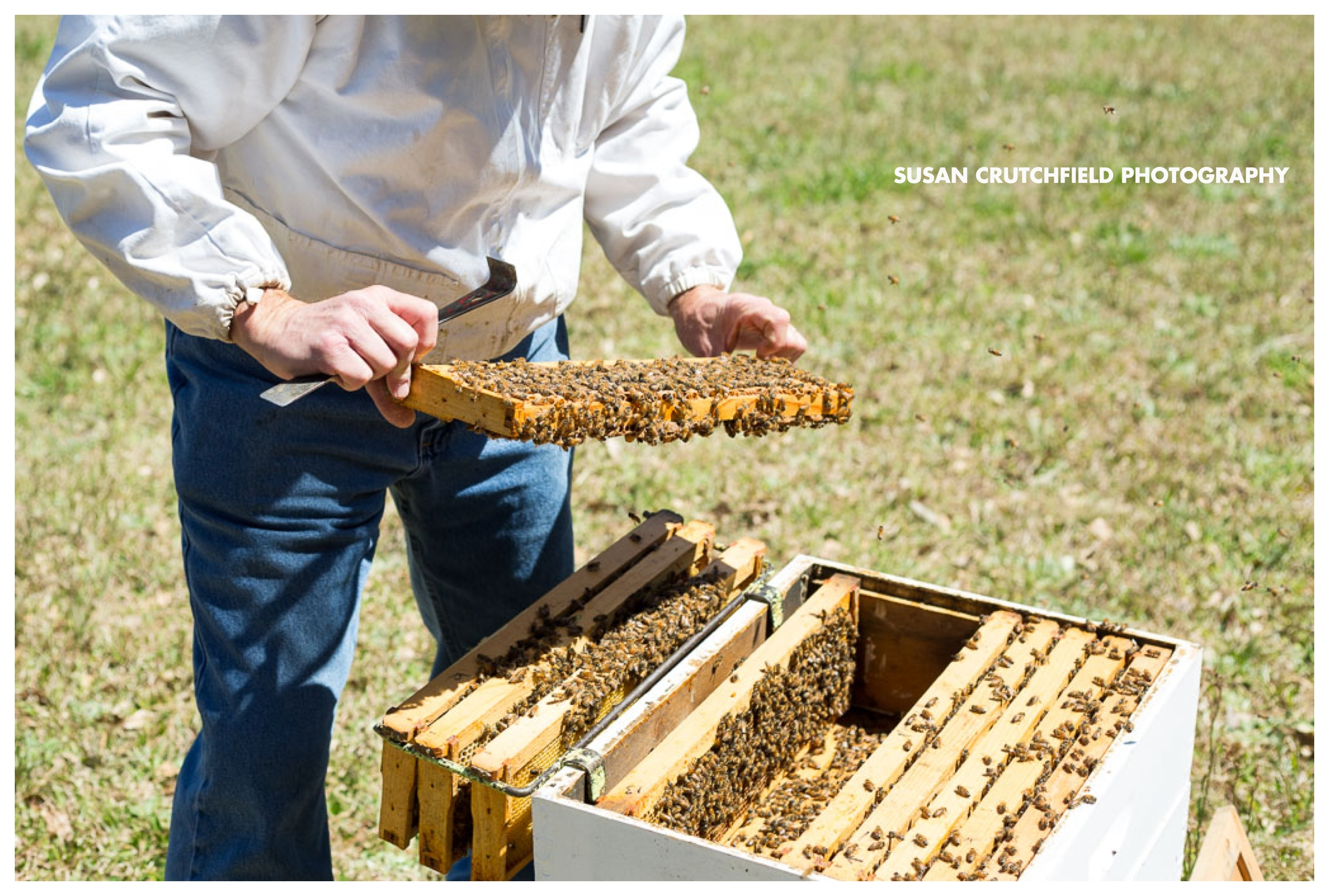 Barrington Farms Apiary