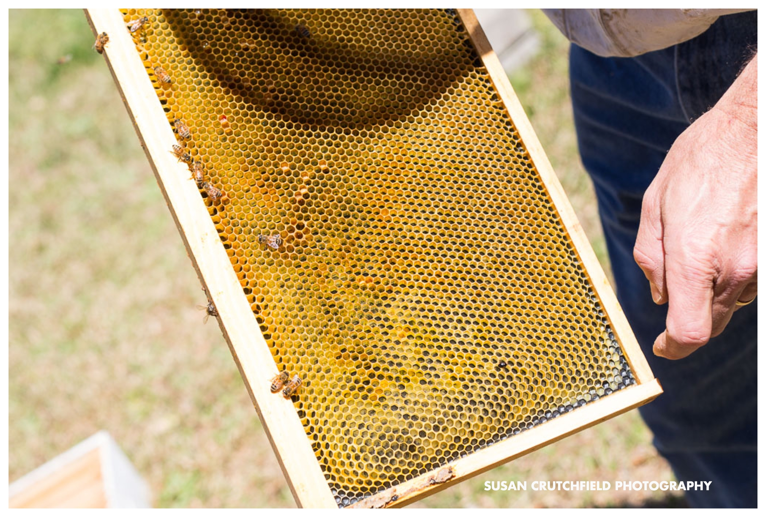 Sustainable Beekeeping in Georgia