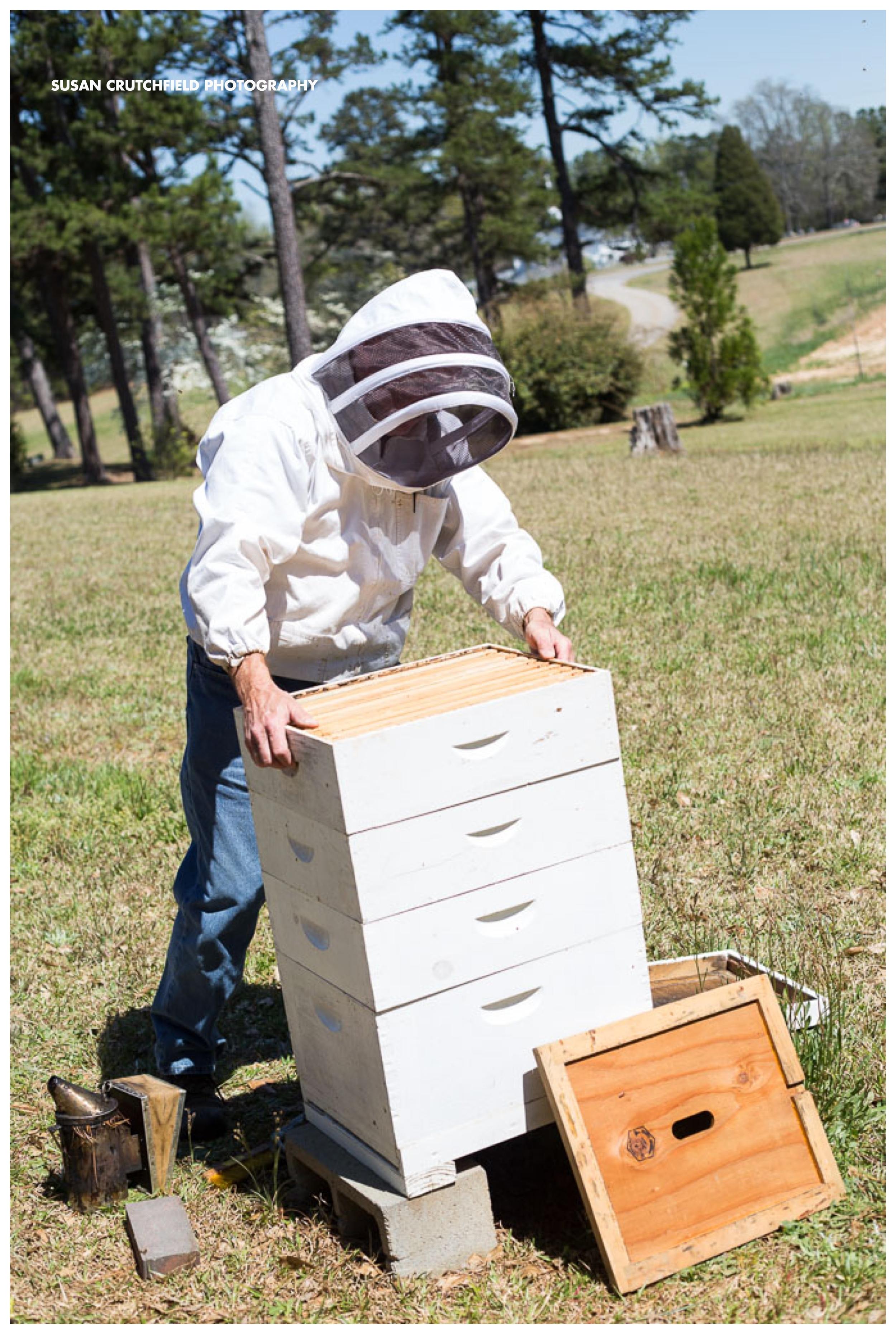 Steve Page, Beekeeper