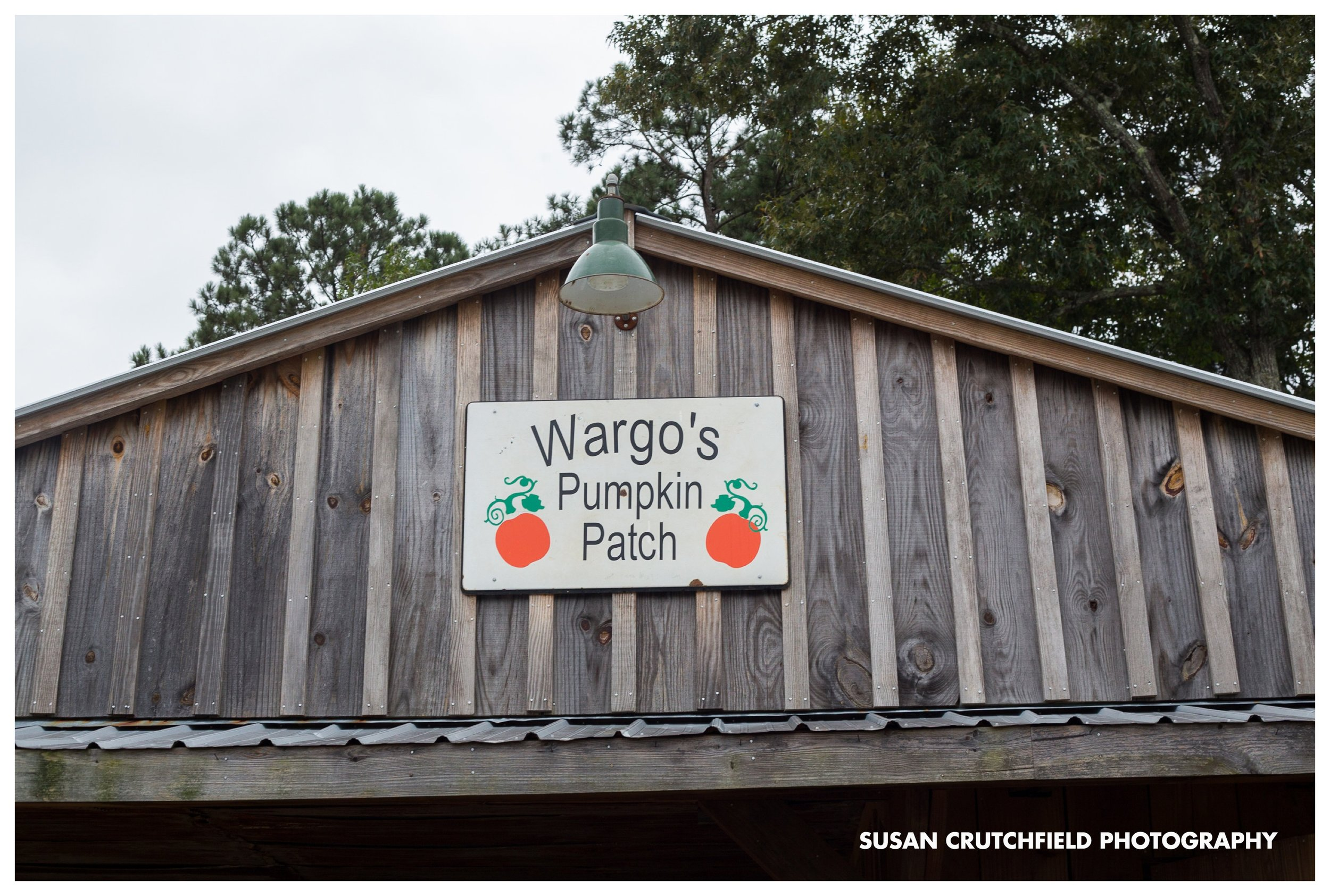 Wargo's Pumpkin Patch Grantville, GA © Susan Crutchfield Photography
