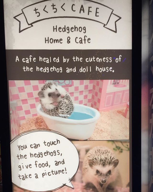 Hedgehog Cafe in Tokyo.  Be healed by the cuteness. This is something I can get behind.