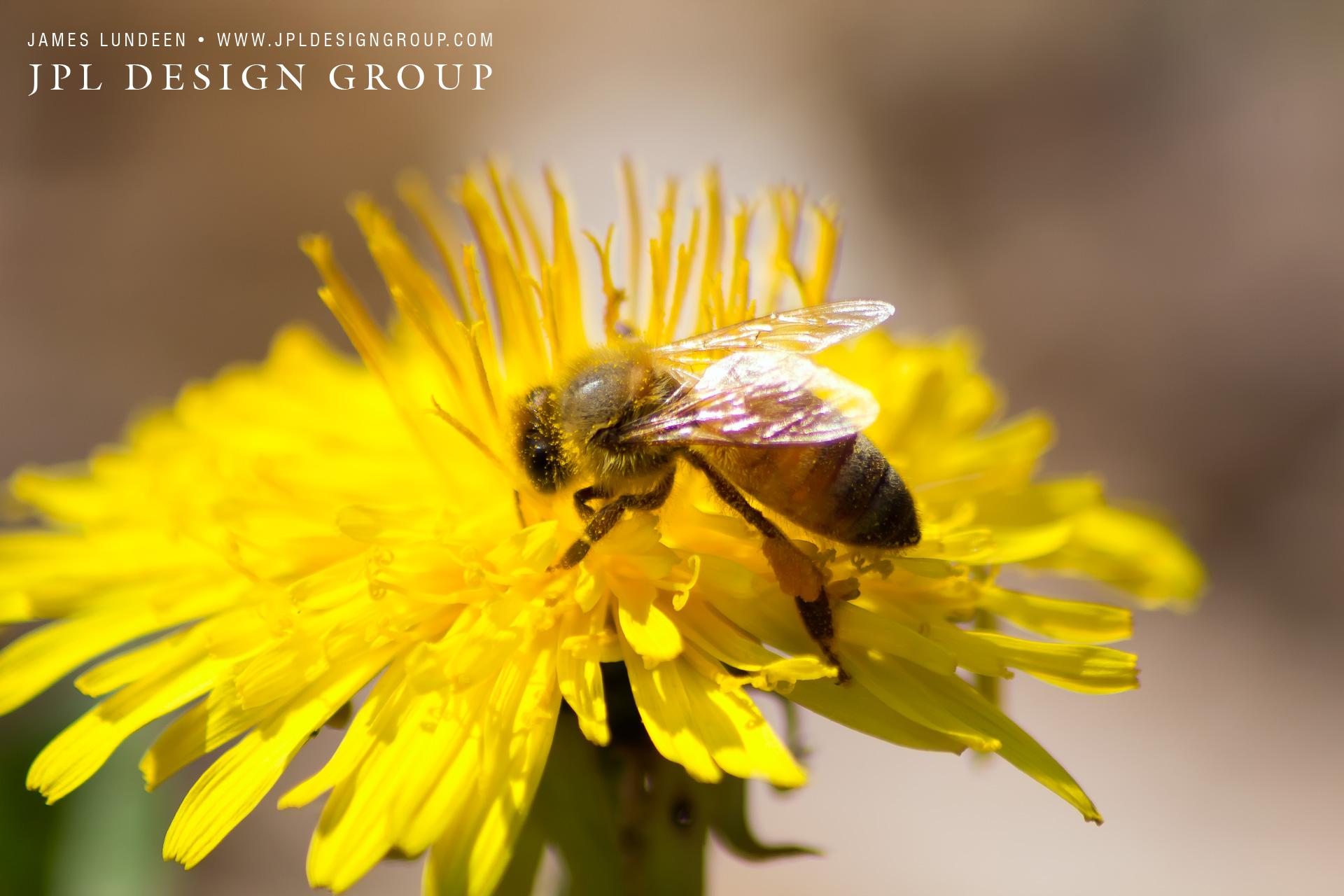 Bee Dandy