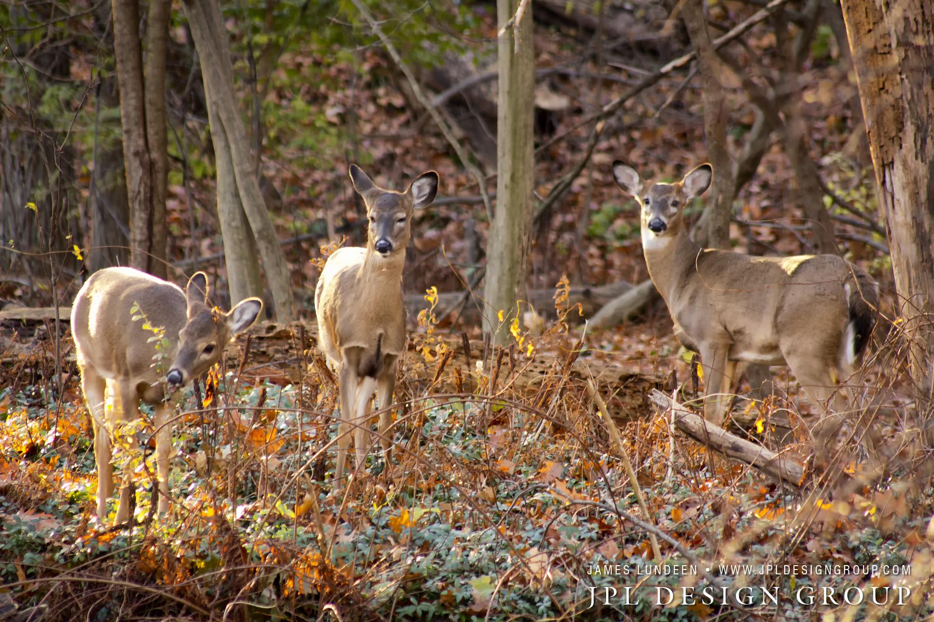 Yes Deer Photo Credit: James Lundeen