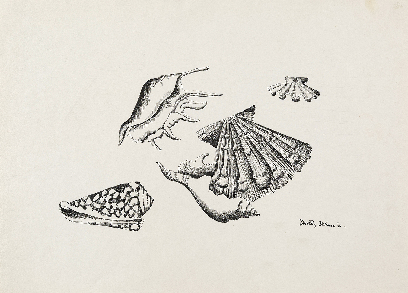 Drawing of four shells
