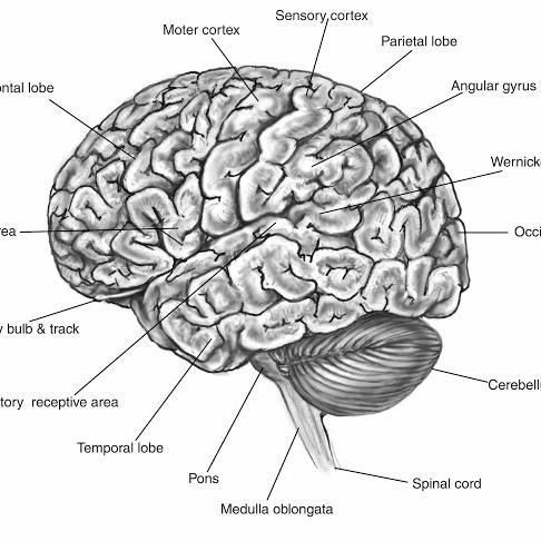 Brain-Function-Map.jpg