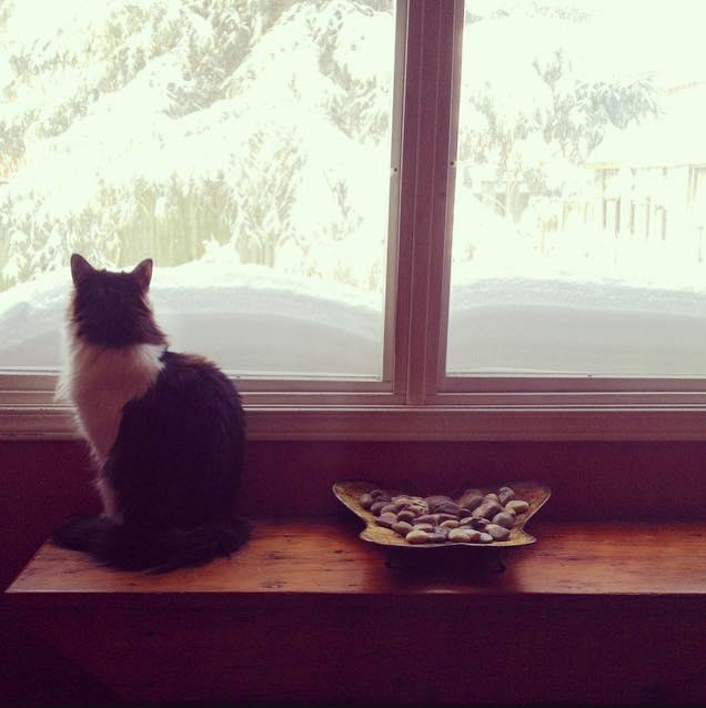 Chloe catting.