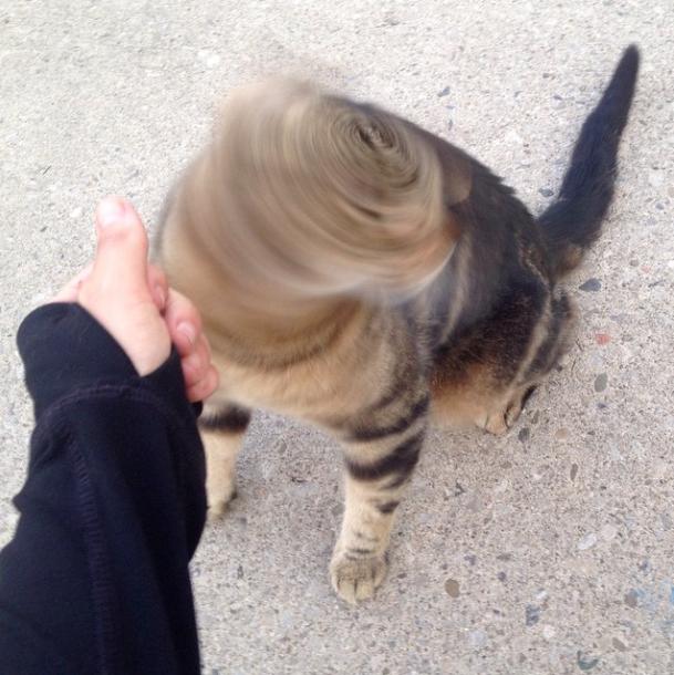 Creepy kitty head