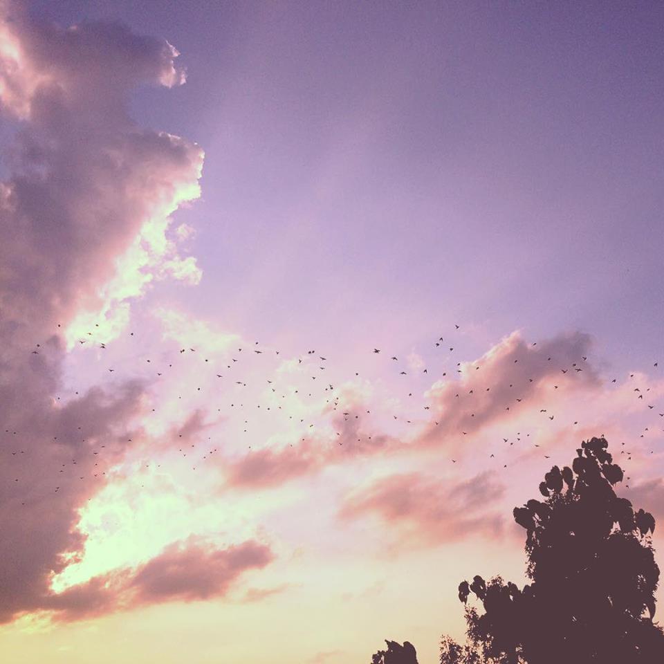 Birds dancing in the sky
