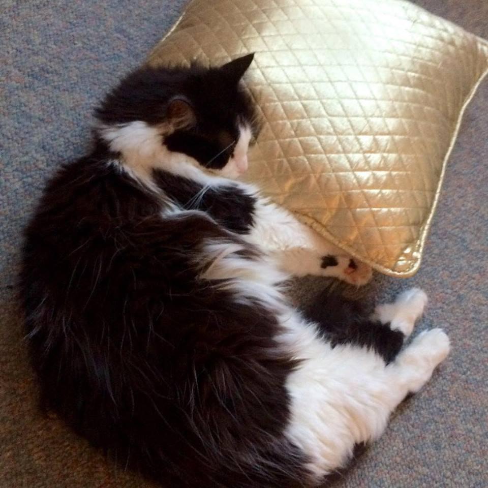 Kitties use pillows, too :)