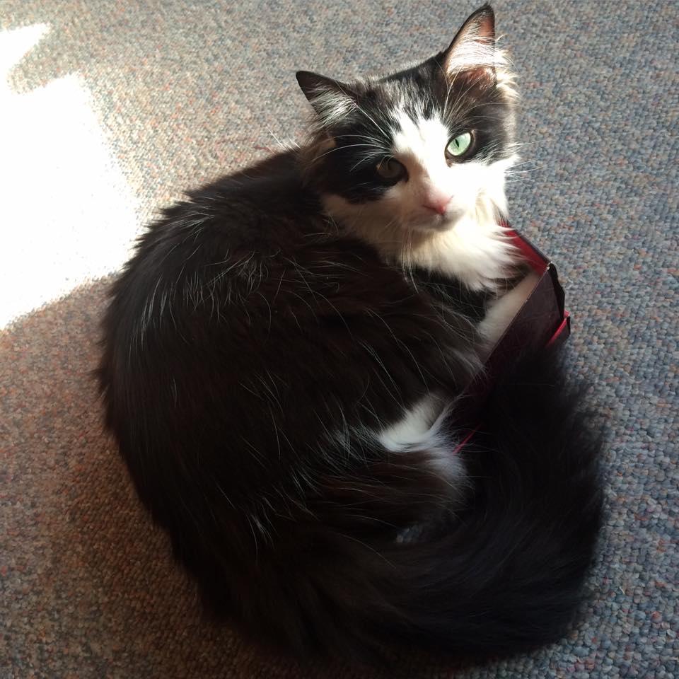 Chloe in a box