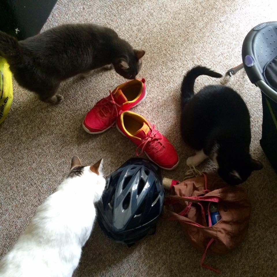Carmen's kitties welcoming me and my things