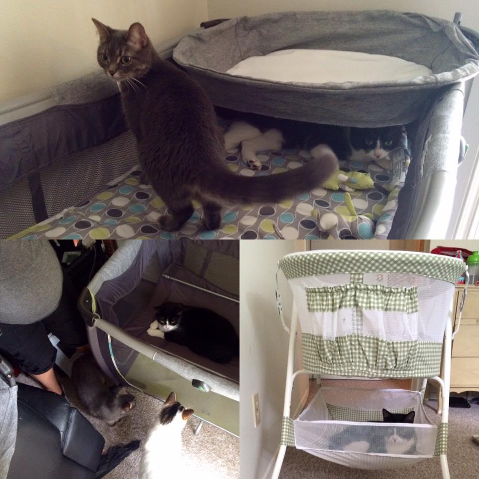 Carmen's kitties helping us prepare for the baby