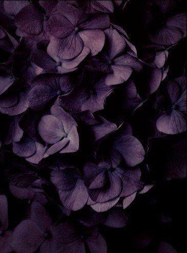 darkflowers.jpg