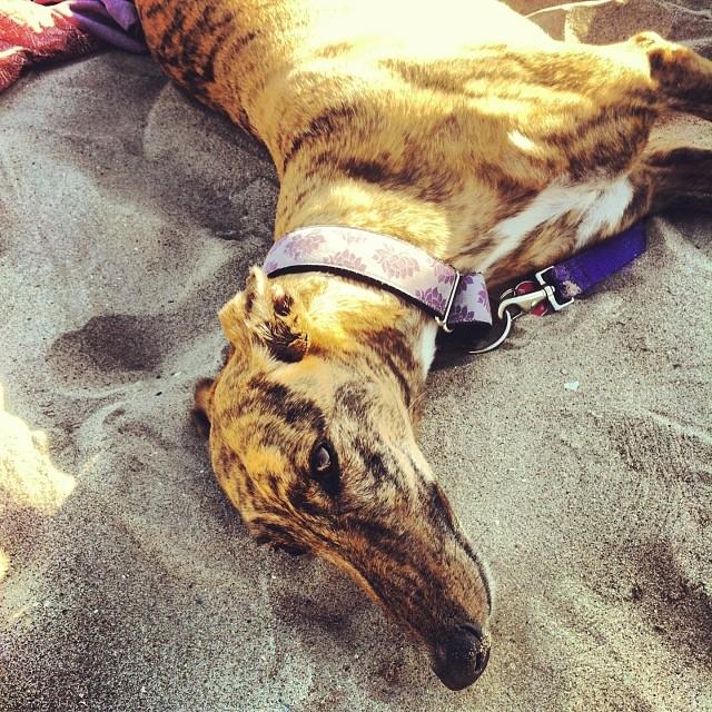 #beachdog #brightonbeach #1stbeachday