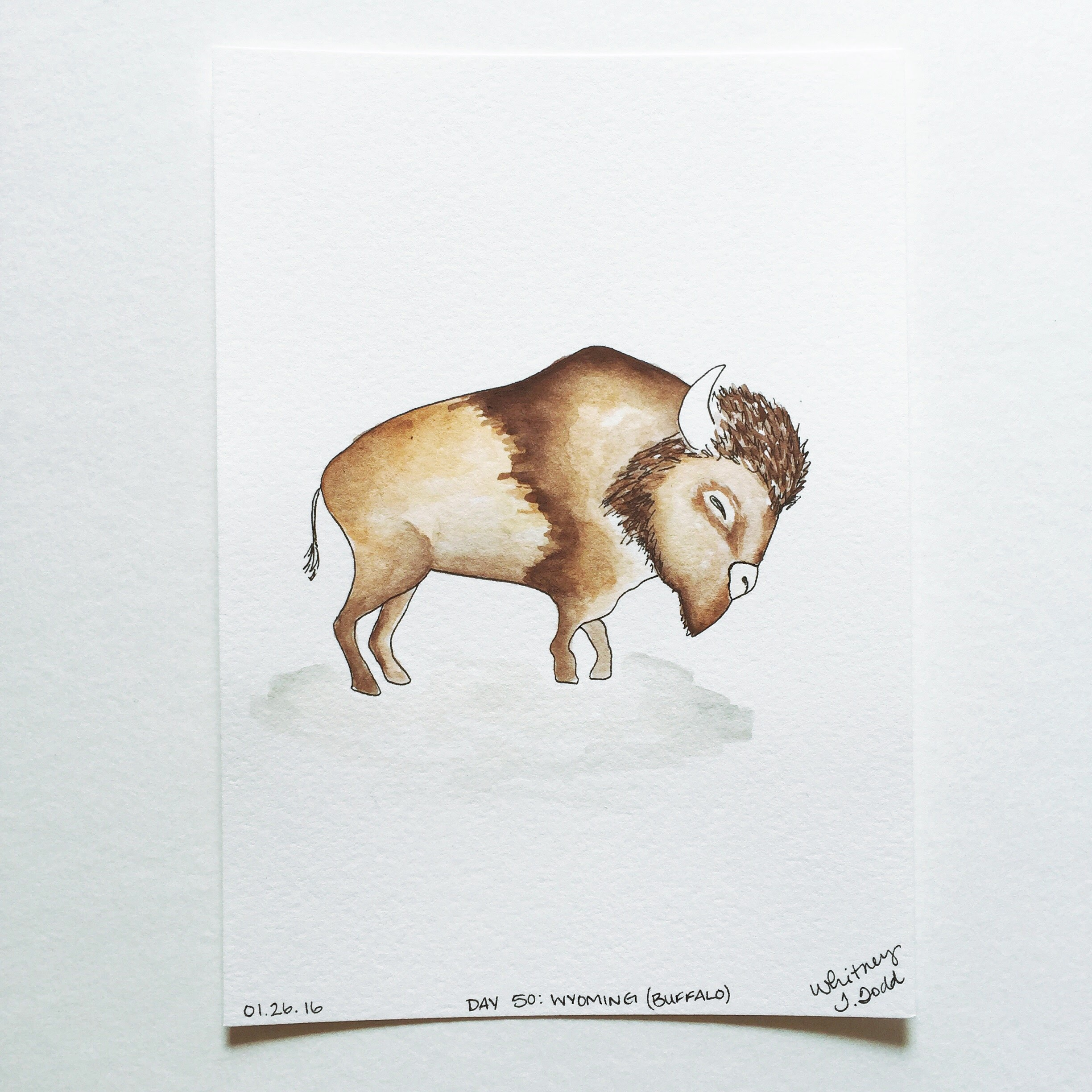 Illustration Buffalo of Wyoming by Whitney Todd // via Jitney's Journeys