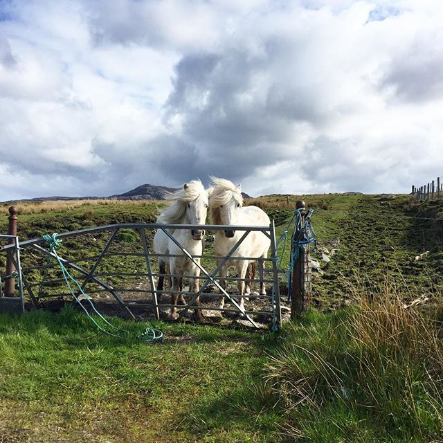 TWINS!! Put a couple of spiraled horns on these horses and they could easily pass for unicorns. 🦄🦄 . . . #horses #farmanimals #animalsofscotland #twinhorses #travelphotography #magical #photooftheday #colorcombo #colorpalette #everydaycolor #travelers #wanderlust #colourlovers #adventureisoutthere #acolorstory