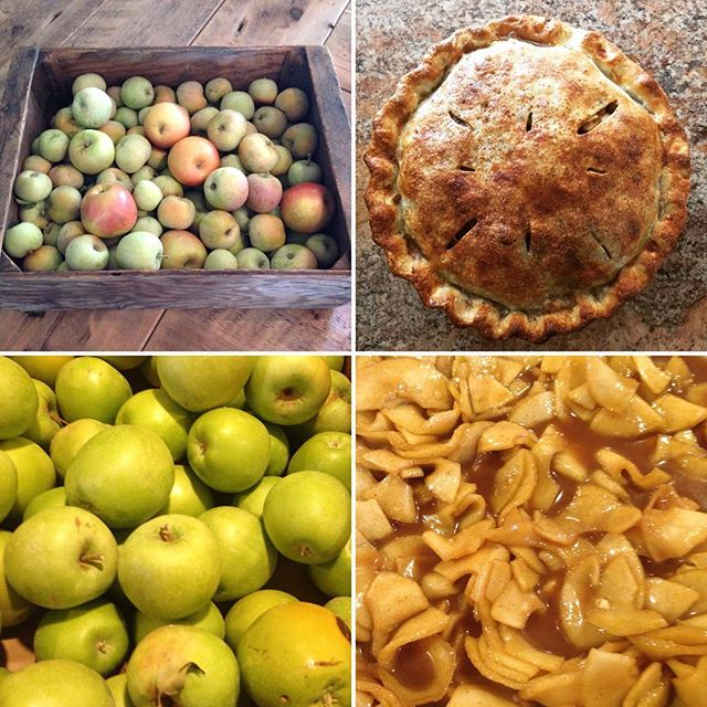 #lastoftheapples #ranchodosamantespie #pasoroblesvacationrental #farmstayvacationrental
