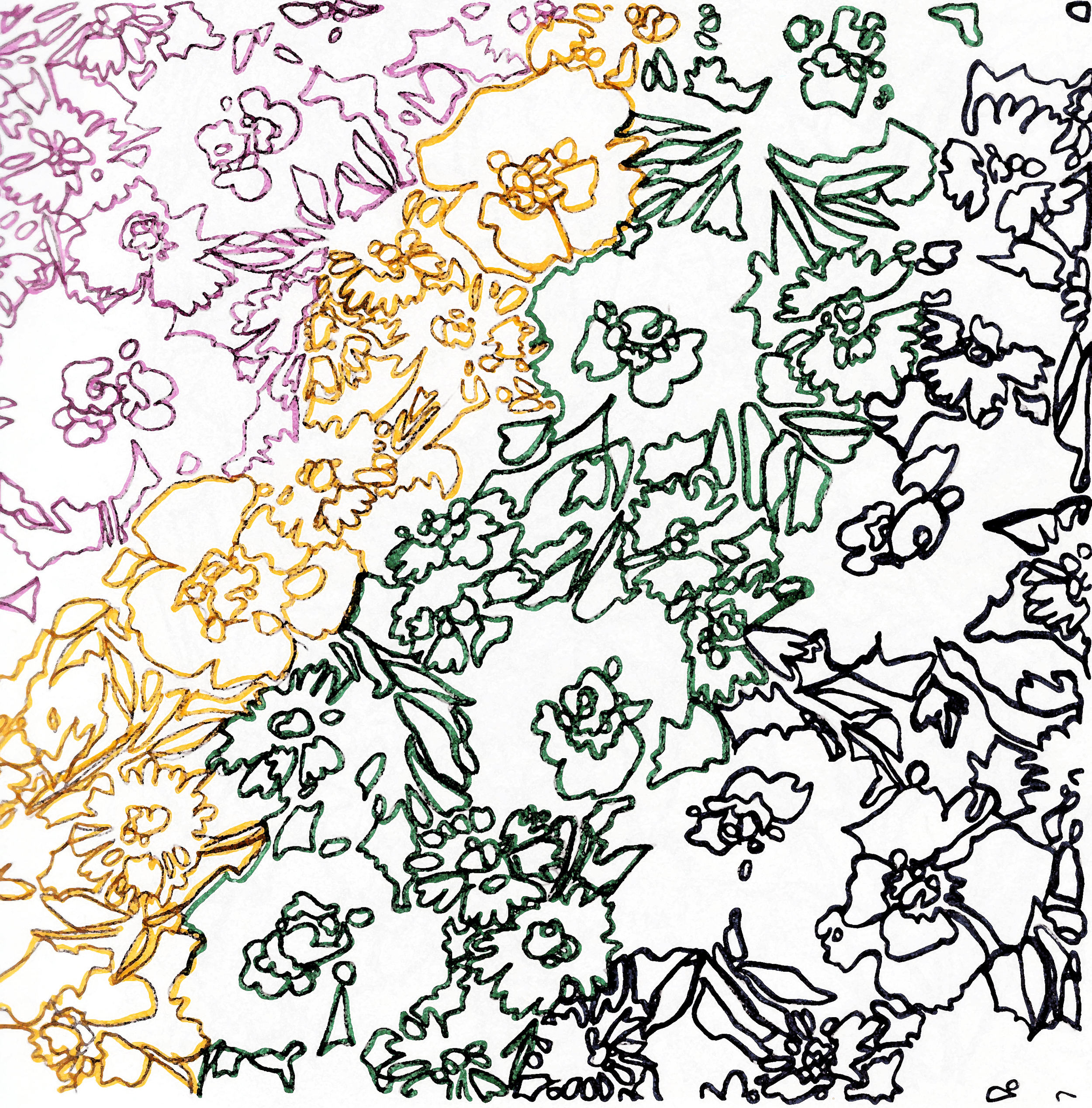 Contour Flowers Light Water Color.jpg