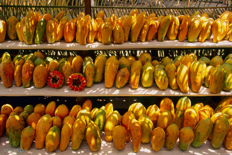 Sun dappled ripe papayas displayed on shelves at a fruit market, Orotina, Alajulea, Costa RicaPapaya (Carica papaya) has high nutritional value and has more carotene than most other fruits.