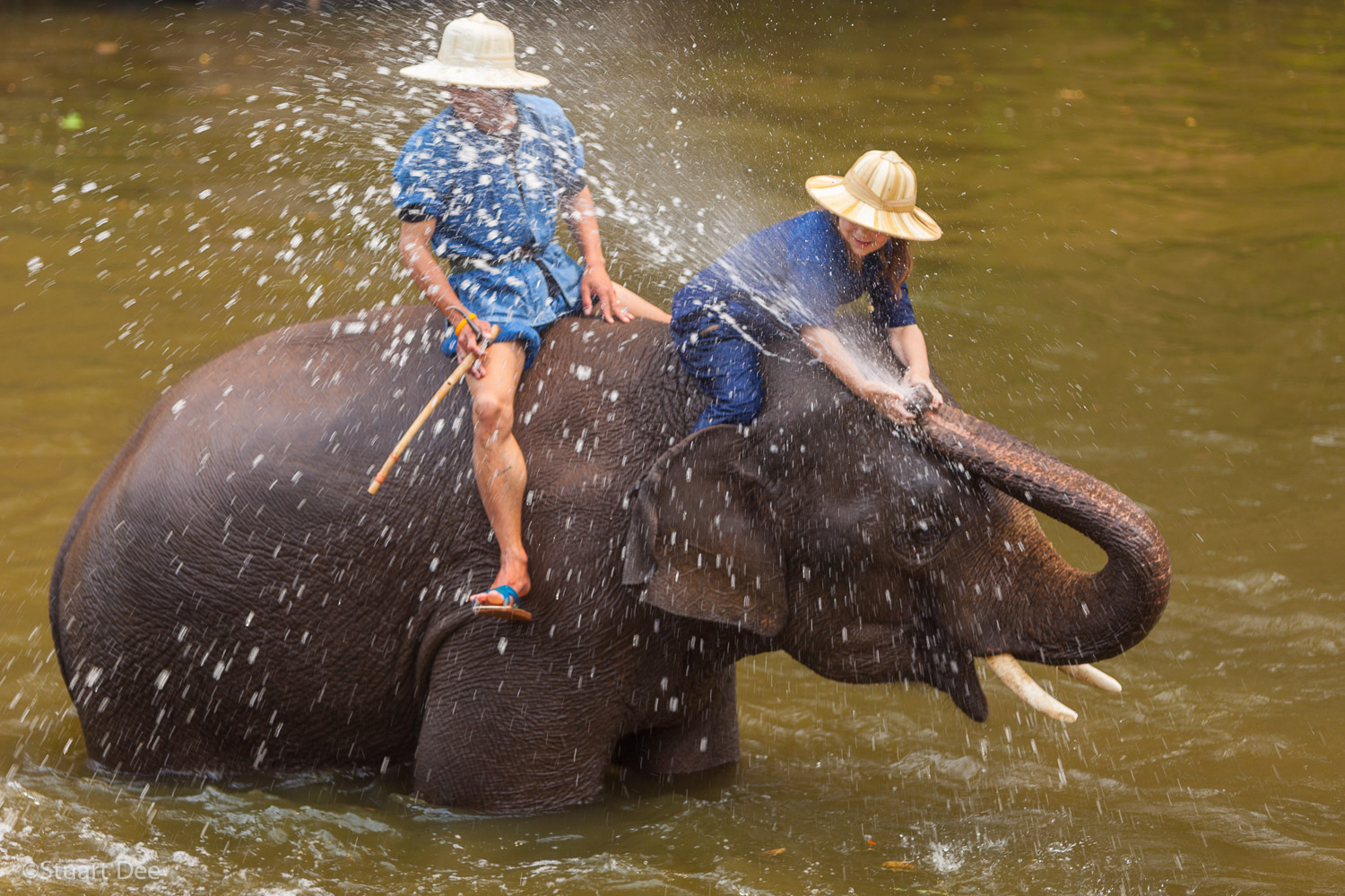 Mahouts washing elephants in river and playing, Lampang, Thailand