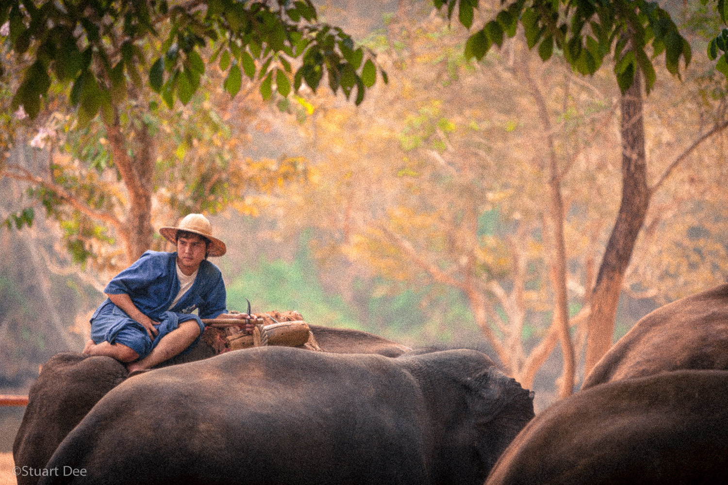 Mahout on elephant, Lampang, Thailand